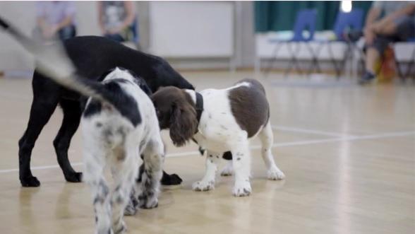 Puppy Play at Puppy School